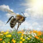 法人営業の徹底!中小企業に欠かせないミツバチ営業